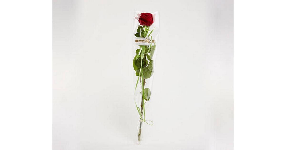 Afskårne Roser kærlighed afskårne blomster - sammenlign priser hos pricerunner