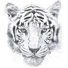 Love mae Tiger Wallsticker