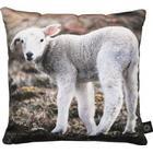 By Nord Baby Lamb Cushion 30x30cm