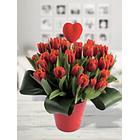 Bunchmakers Frischer Blumenstrauß Valentinstulpen Rot