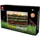 Alga Worm World