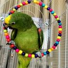 Parrot Cage Toys Standing Rope Parrot Holder Rotation Ladder Stand Staircase - Random Color