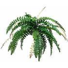 EUROPALMS Boston fern with flower, green, 85cm