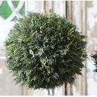 Cypress kugle - stor