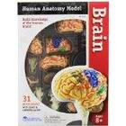 Learning Resources Human Anatomy Brain Model