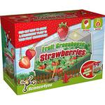 Science4you Fruit Greenhouse Strawberries