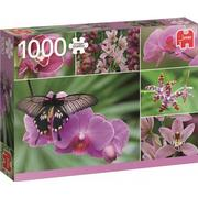 Jumbo Holland Orchids 1000 Pieces