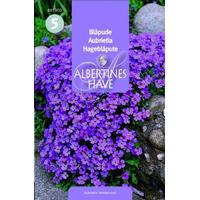 Blåpude Aubrietia Stenbedets 0.1g