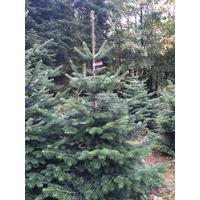 juletræ i potte bilka