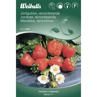 Weibulls Jordbær Sarian