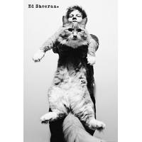 GB Eye Ed Sheeran Cat Maxi 61x91.5cm Plakater