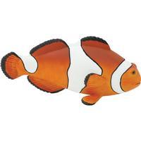 Safari Clown Anemonefish XL 261829