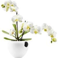 Eva Solo Orchid Pot 14.8cm
