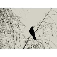 Displate Crow in a Willow Tree 45x32cm Affisch