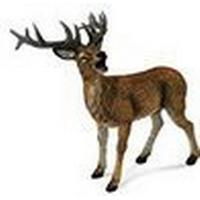 Collecta Red Deer Stag 88469