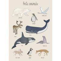 Sebra Plakat Arctic Animals