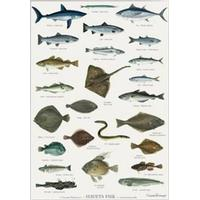 Havets fisk - plakat