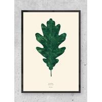 By Garmi - Quercus alba - Oak leaf