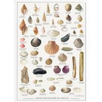 Havets Muslinger og Snegle - plakat