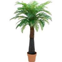 Europalms Canary Date Palm, 150 cm TILBUD NU