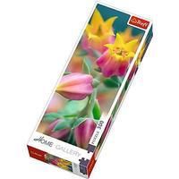 Trefl Flowers in Bloom