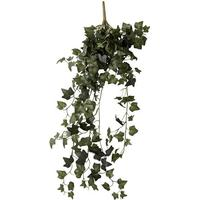 efeu Flora grøn