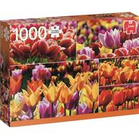 Jumbo Holland Tulips 1000 Pieces