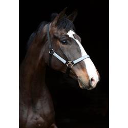Jacson Reflexhalfter Pony, Schwarz
