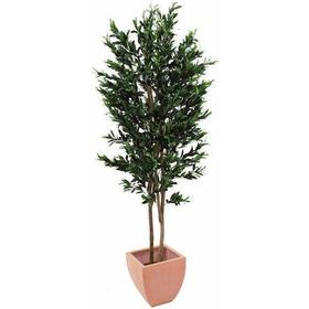 EUROPALMS Olive Tree with fruits, 2 trunks, 200cm