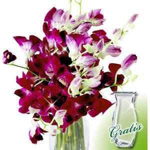 10 Orchideen im Bund mit Vase