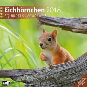 Ackermann Kunstverlag Eichhörnchen 30×30 2018 / Kalender