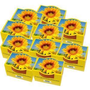10 Minipflanz-Sets *Blumen*