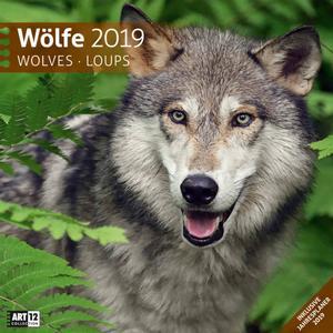 Ackermann Wölfe - Kalender 2020 - 30 x 30 - Ackermann