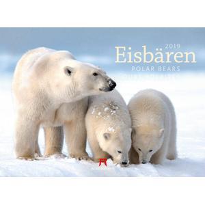 Ackermann Eisbären Kalender 2020 - 33 x 45 cm - Ackermann