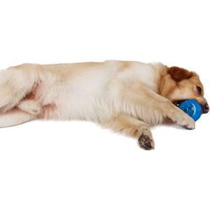 - ZooRoyal Hundespielzeug Dental Ball blau
