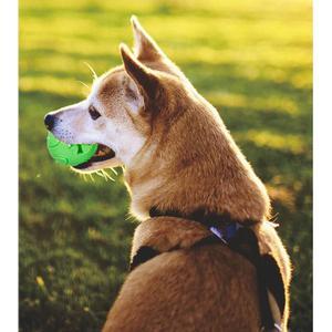 - ZooRoyal Hundespielzeug Dental Ball grün
