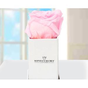 1 rosa haltbare Rose in weier Box