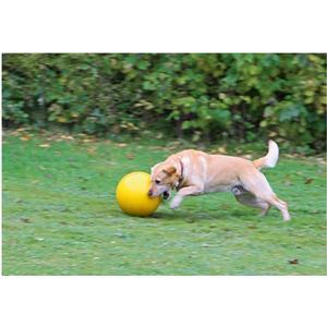 - Hundespielball Durchmesser 30 cm