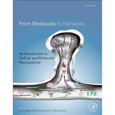 From Molecules to Networks (Inbunden, 2014)