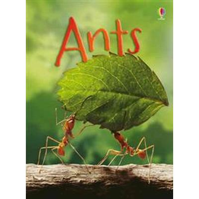 Ants (Inbunden, 2016)