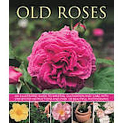 Old Roses (Häftad, 2013)