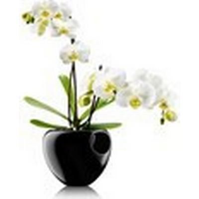 Eva Solo Orkidepotte 15cm