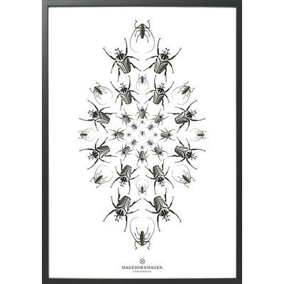 Hagedornhagen Speculo SP3 70x100cm Affisch