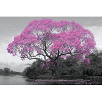 GB Eye Tree Blossom Maxi 61x91.5cm Affisch