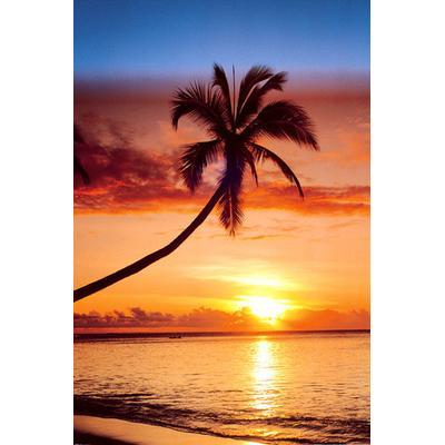 GB Eye Sunset & Palm Tree Maxi 61x91.5cm Affisch