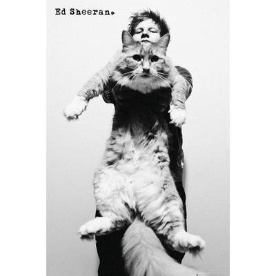 GB Eye Ed Sheeran Cat Maxi 61x91.5cm Affisch