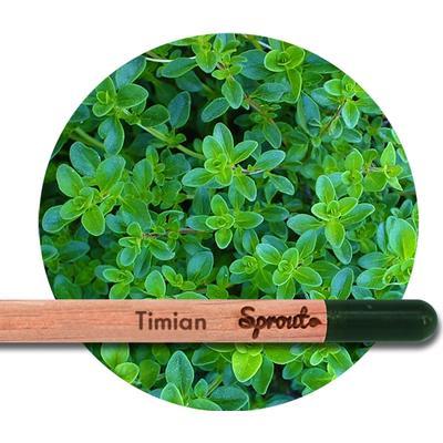 Sprout (Timian) - Blyanten der kan spire