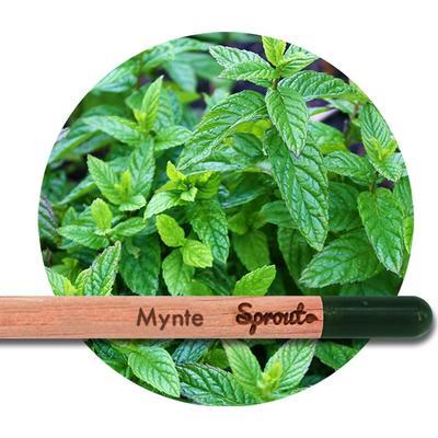 Sprout (Mynte) - Blyanten der kan spire