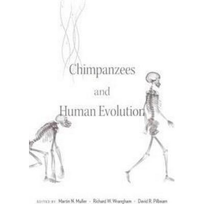 Chimpanzees and Human Evolution (Inbunden, 2017)
