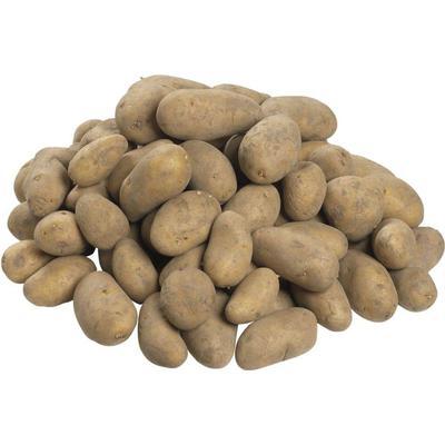 Silvan Solist læggekartofler